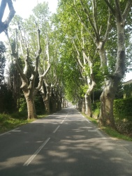 Provenza on the road